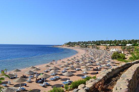 Domina Coral Bay Oasis: пляж огромный, несмотря на большое количество отдыхающим, всем хватает места с достатком