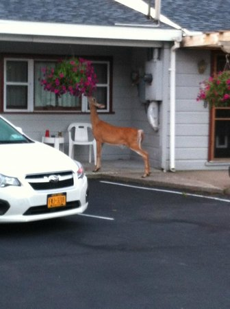 Christy's Motel: Deer on Porch
