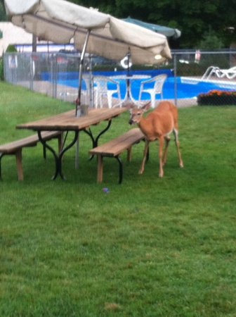Christy's Motel: Deer at Picnic Table
