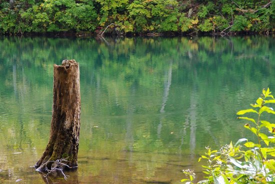 Dokkonuma Swamp
