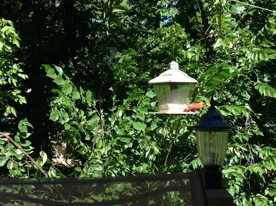 Heartstone Inn and Cottages : Hummingbirds, every morning and afternoon