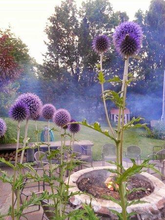 Belleayre Lodge: plants