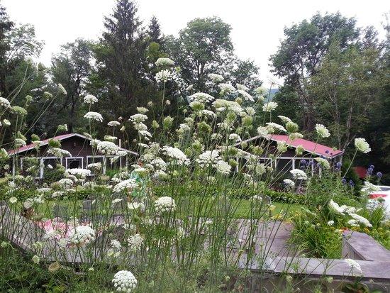 Belleayre Lodge : plants