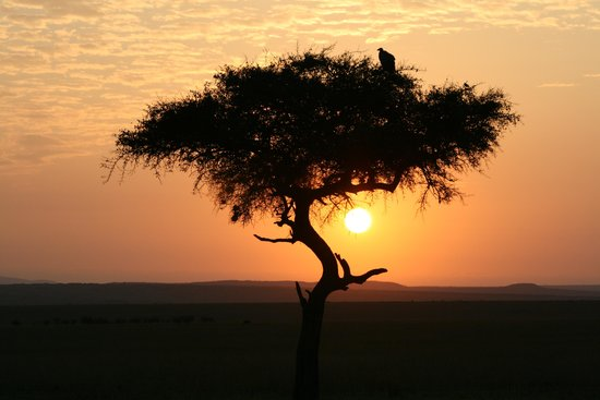 Mara Intrepids Luxury Tented Camp : Early morning game drive - sun up