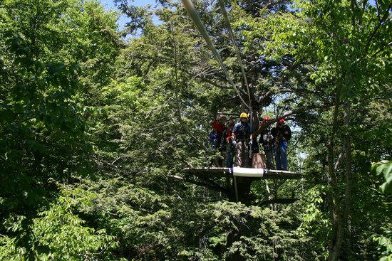 Bretton Woods Canopy Tour: Zip right in!