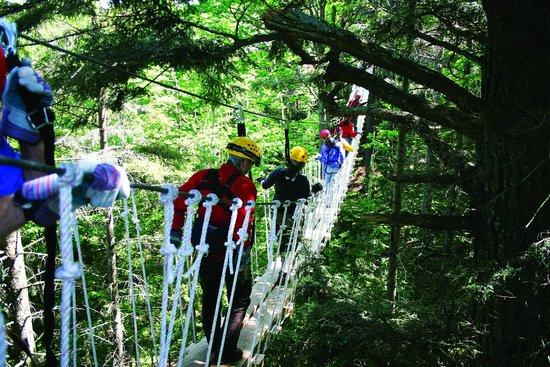 Bretton Woods Canopy Tour: Sky bridge!