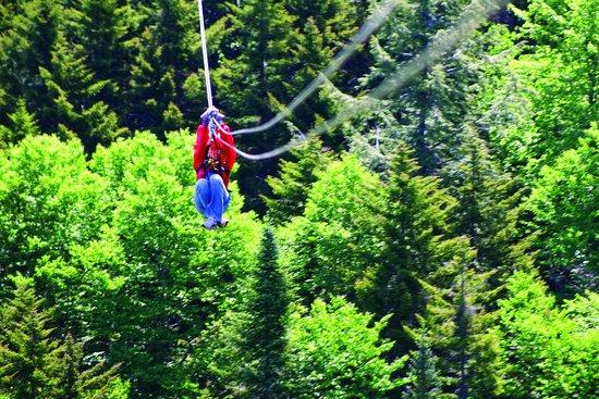 Bretton Woods Canopy Tour: Gliding through the trees!