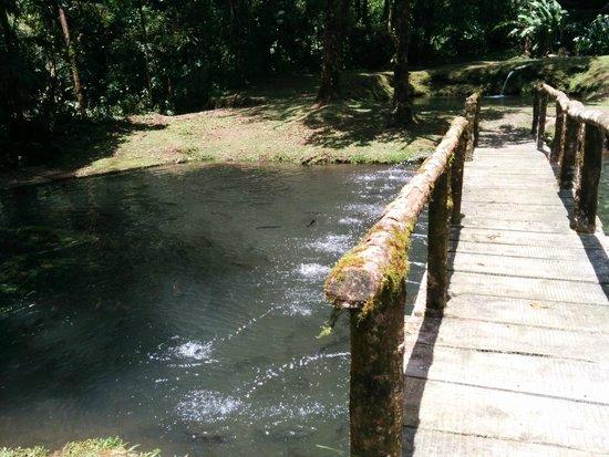 El Silencio Lodge & Spa: farm raised trout