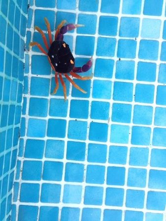 JW Marriott Guanacaste Resort & Spa: Yes, he is in the pool!