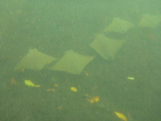 Los Tuneles: Rays