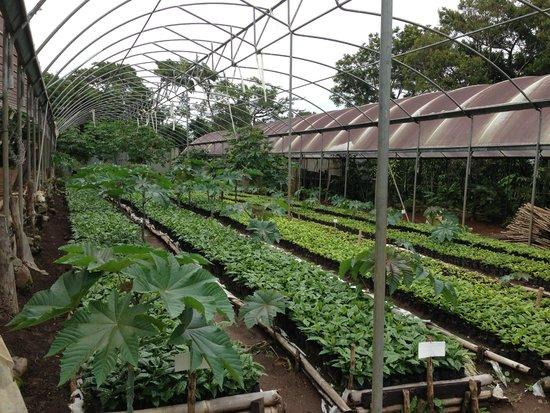 Selva Negra Mountain Resort: miles de plantas de café