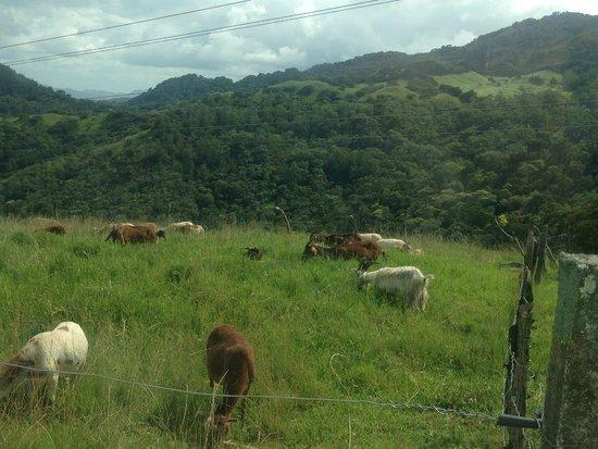 Selva Negra Mountain Resort: Cabras y Ovejas