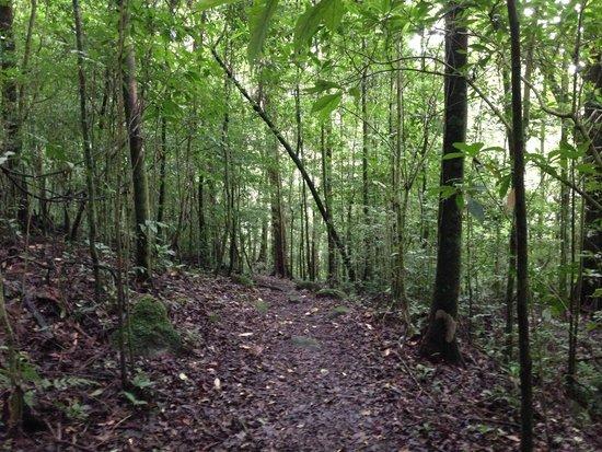 Selva Negra Mountain Resort: Senderos del Bosque