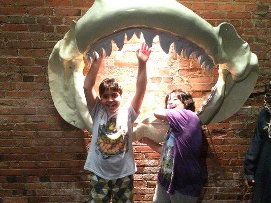 Greater Cleveland Aquarium: مكان جميل جداا والاهم الاولاد مبسوطين للاخر