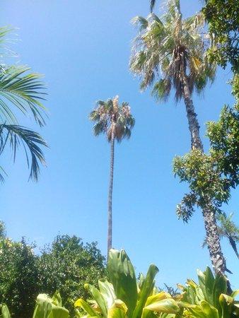 Jardín Botánico: De nombreux palmiers de tous les pays du monde