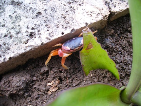 Hotel Playa Pesquero Resort, Suite & SPA: just one of the crabs