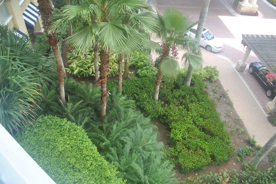 The Ritz-Carlton Golf Resort, Naples : 1 of the balcony views, see even the parking lots are pretty...