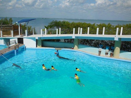 Paradisus Cancun: activité , aquarium, les dauphins, au centre d achat la Isla