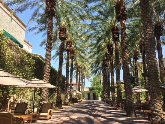 Arizona Grand Resort & Spa : hotel grounds
