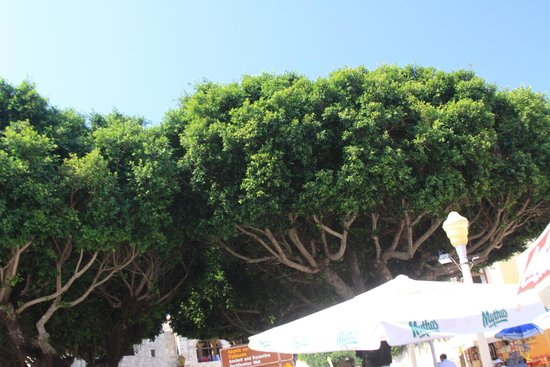 Eros: Trees in front of the restaurant