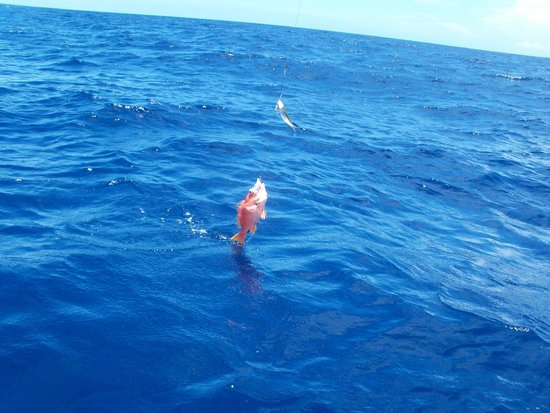 Seakarus Tours: Red Snapper