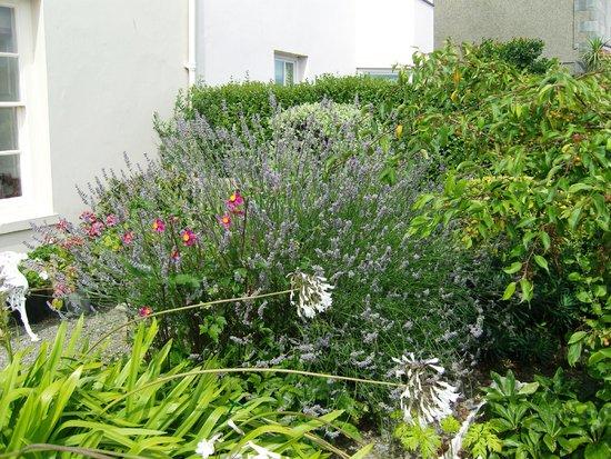 Cleifiog B&B: front garden