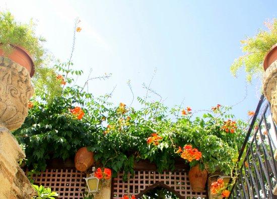 Fiori sul terrazzo di un'attività di Lindos