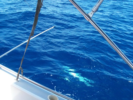 Seakarus Tours: Reeling in a Barracuda