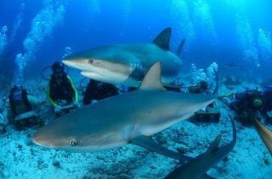 Ocean Explorers Dive Center: Freeking awesome