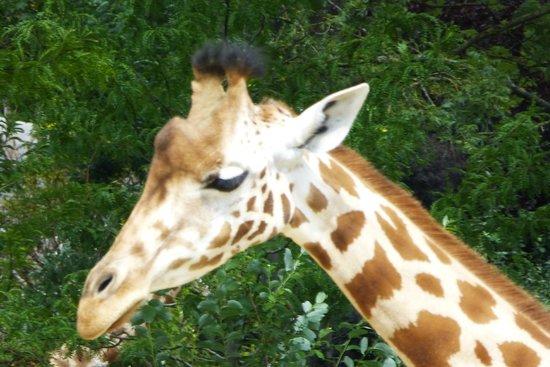 Parc Zoologique de Paris: Zoo de Paris