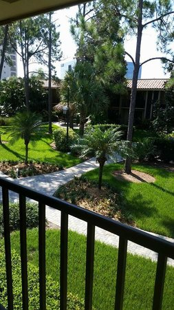 Doubletree by Hilton Orlando at SeaWorld: Visual from my room