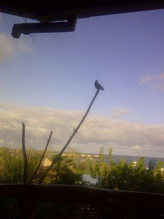 Galapagos Casa Playa Mann : desayuno en la terraza con un vista al paisaje