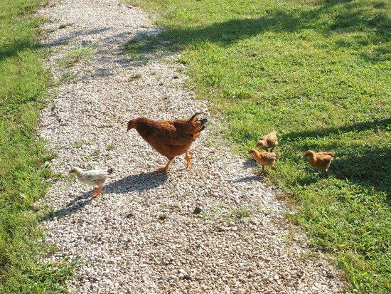 Etenna Bungalow: Cluck cluck