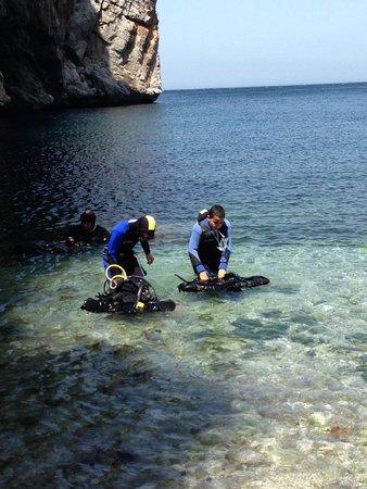 Le Dauphin Plongeur