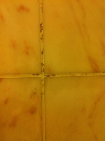 Hilton Antwerp Old Town : Rooms disgusting! Mold in groat!!