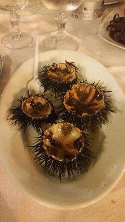 Trattoria Da Calogero : Ricci freschi e gustosi