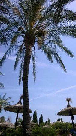 Prinsotel La Dorada: Example of established palm trees and natural parasols.