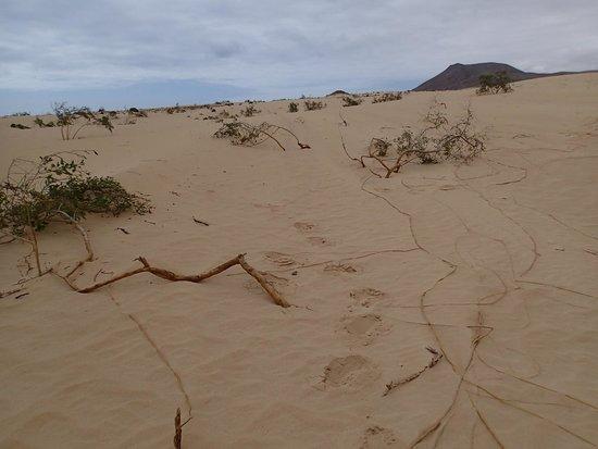 Corralejo Dunes: dunas coralejo