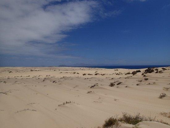 Dunas de Corralejo: dunas coralejo