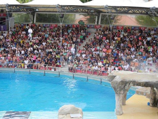 Lisbon Zoo (Jardim Zoologico de Lisboa): Baia dos golfinhos