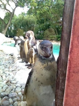 ZSL London Zoo: Hello!