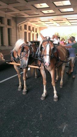 Reading Terminal Market: Amish buggy ride