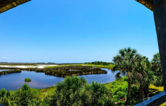 St. Marks National Wildlife Refuge: View from observation platform