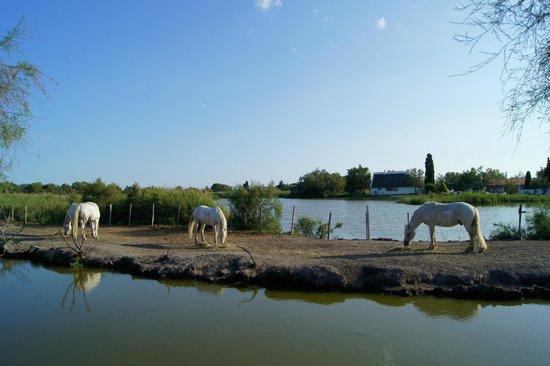 L'Auberge Cavaliere Du Pont Des Bannes: vu de la chambre