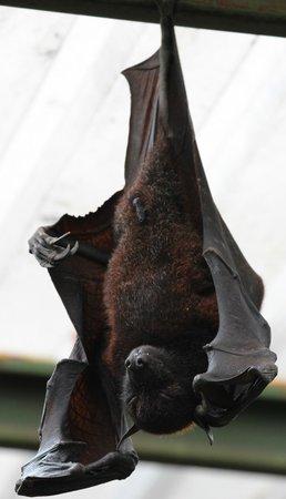 Cango Wildlife Ranch: Fruit Bat