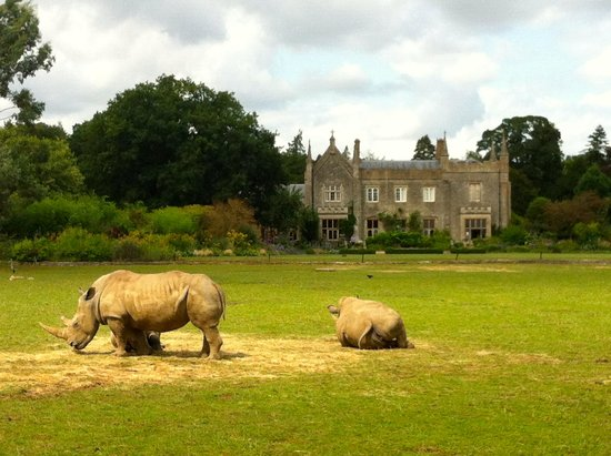 Cotswold Wildlife Park and Gardens: baby rhino and his mum