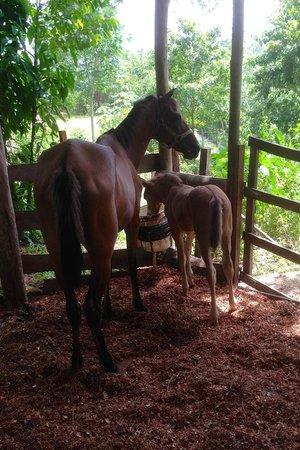 Mystic River Resort: Horseback riding available
