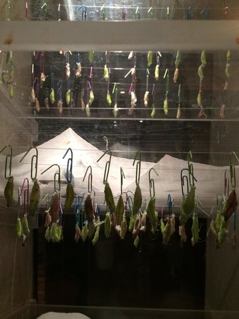 Stanley Hotel : Butterfly Cocoons