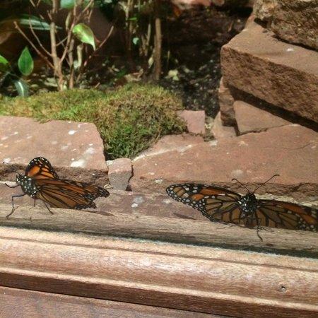 Stanley Hotel : Butterflies
