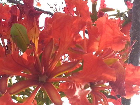 C Shells Guest Quarters : great foliage